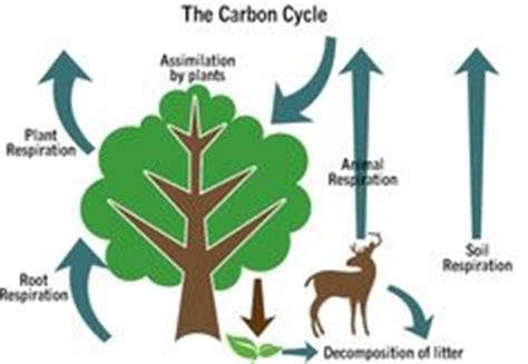 free essay on The Nitrogen Cycle