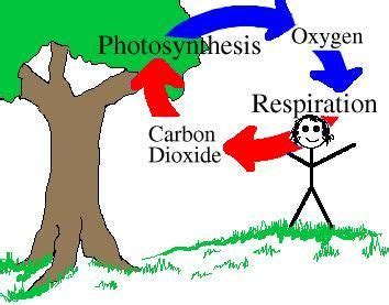 Essay on oxygen cycle
